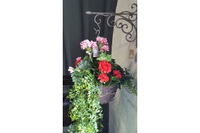 Geranium Mix - Medium - Pink & Red